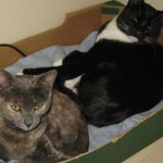 Copsale Cattery Photo 3